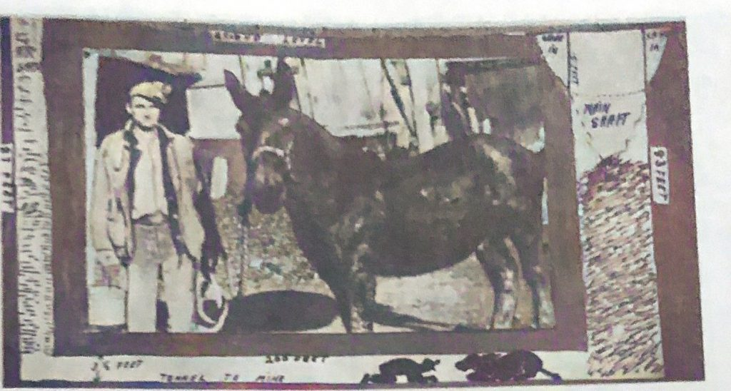 Harry J Walton and his mule Jim